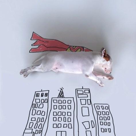 jimmy-choo-bull-terrier-illustrations-rafael-mantesso-2