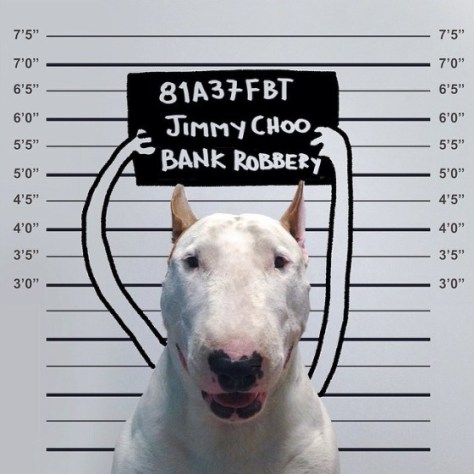 jimmy-choo-bull-terrier-illustrations-rafael-mantesso-4