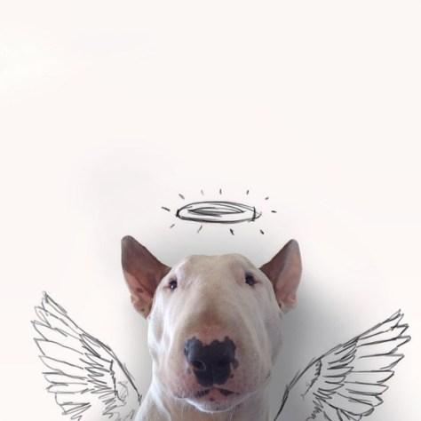 jimmy-choo-bull-terrier-illustrations-rafael-mantesso-7