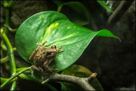 Frog On A Leaf 2